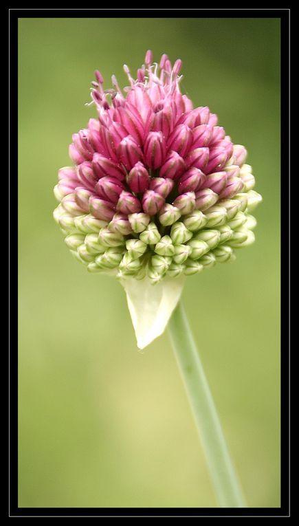 &quot&#x3B;Z'Album&quot&#x3B; : fleurs-2