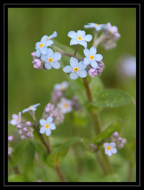 &quot&#x3B;Z'Album&quot&#x3B; : fleurs
