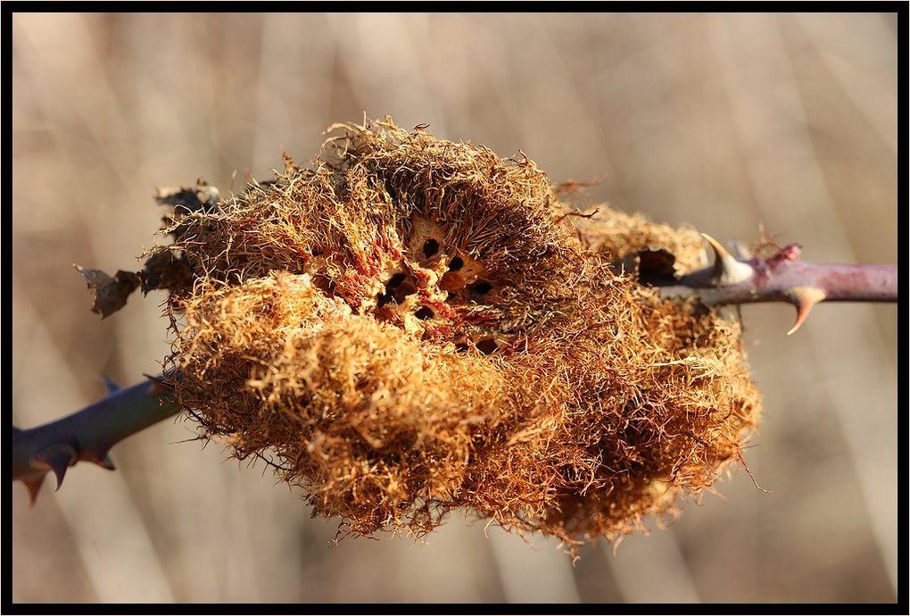 &quot&#x3B;Z'Album&quot&#x3B; : insectes