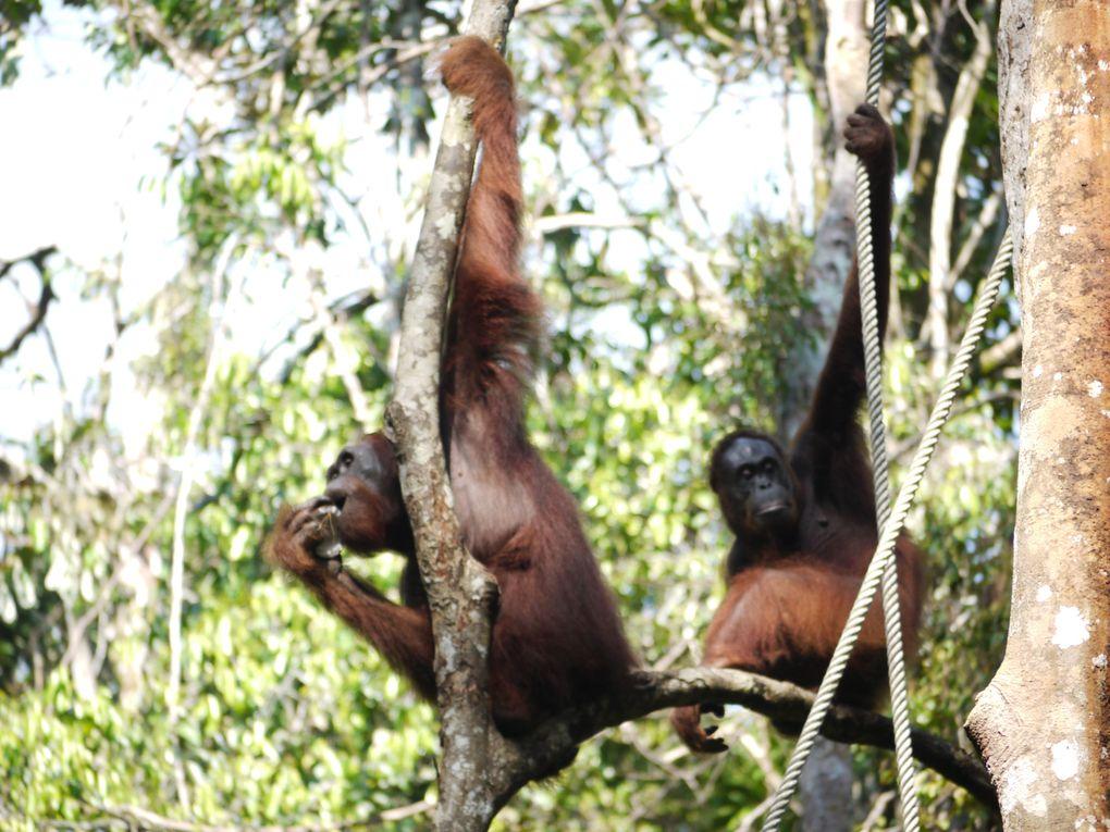Album - Borneo (Malaisie)