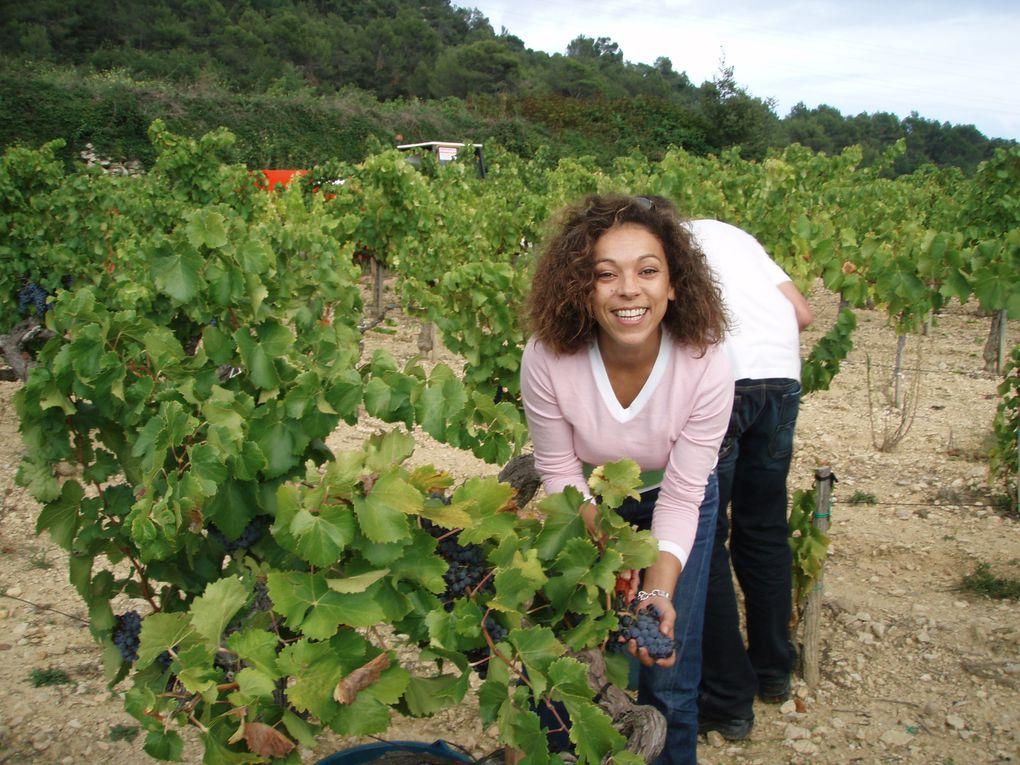 Les vendanges de Vin=Art. Bruno, Aicha et Jean-Luc,