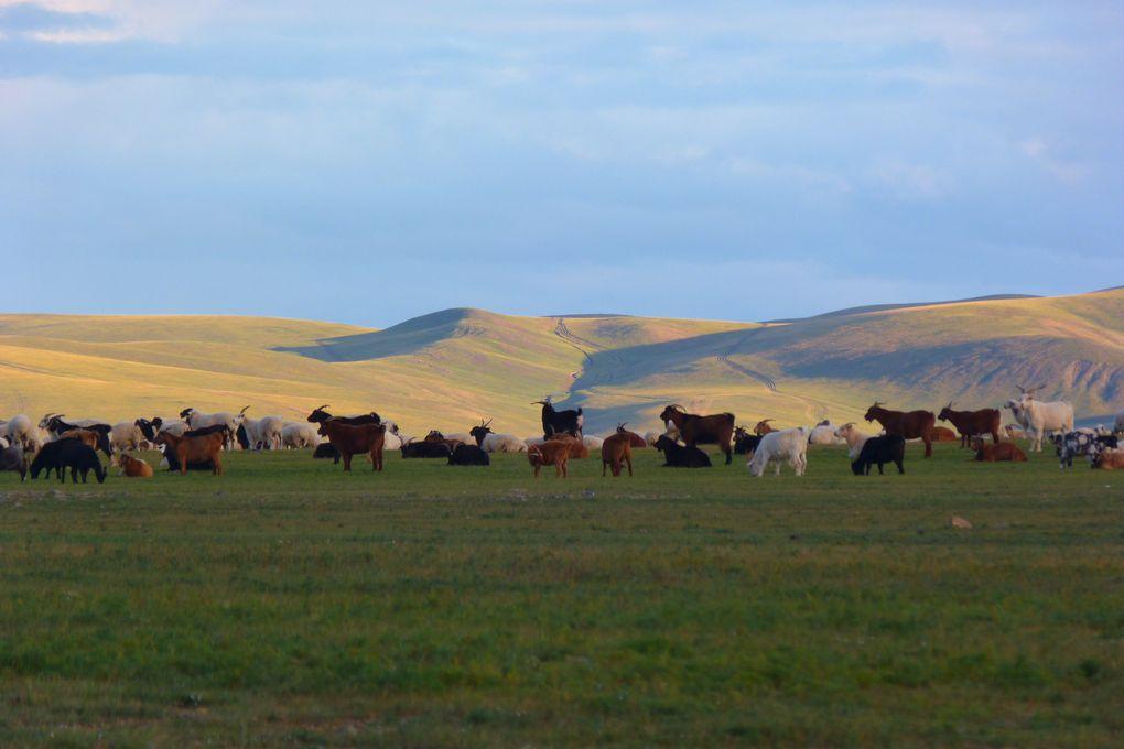 Album - Mongolie-un-coin-de-paradis