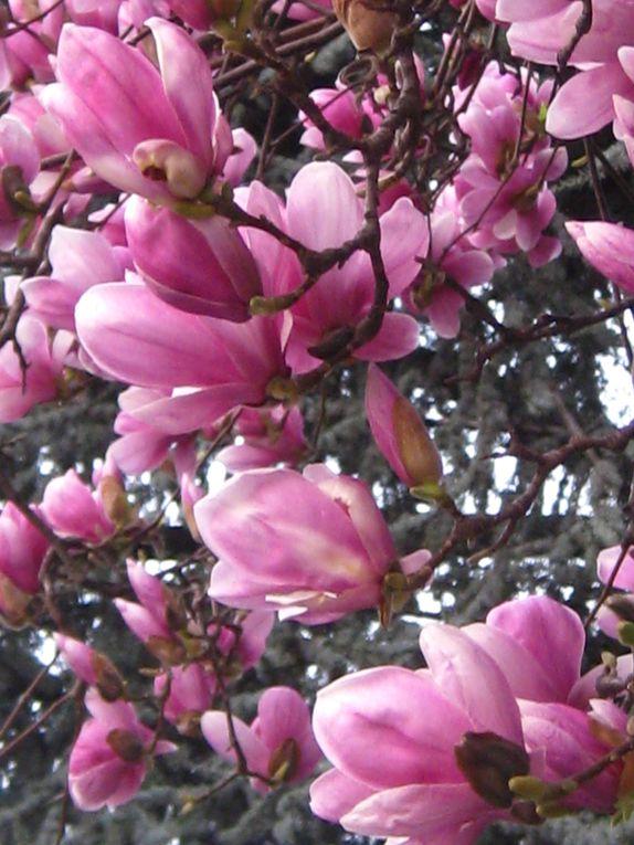 Album - Catturando-la-primavera in città e poco più in là