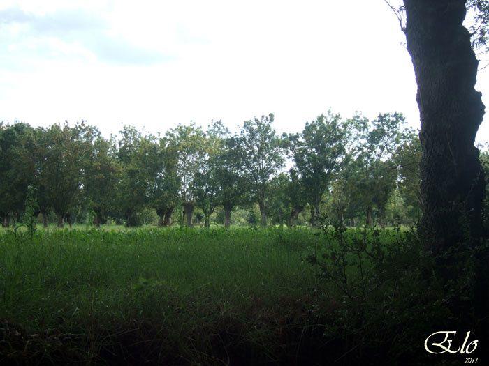 Venise verte ... Autour de l'abbaye de Maillezais en Vendée