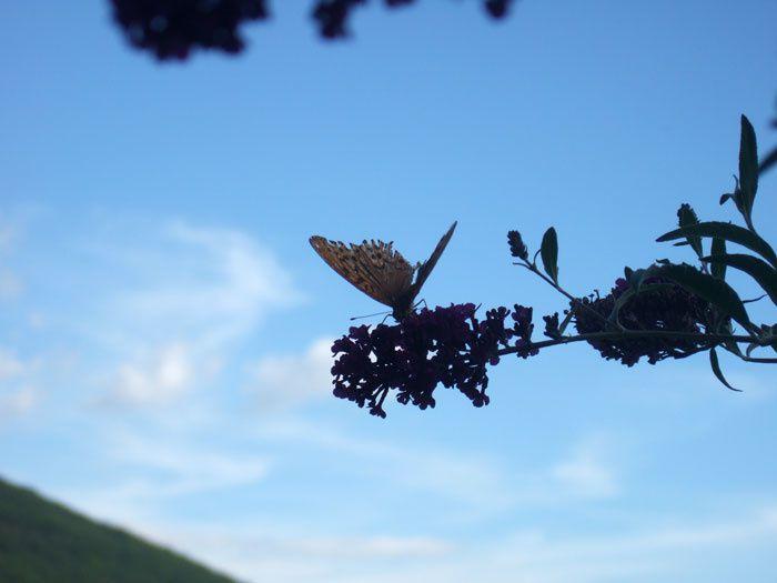 Des papillons, danses naturelles, feux d'artifices de couleurs, vols de vie...