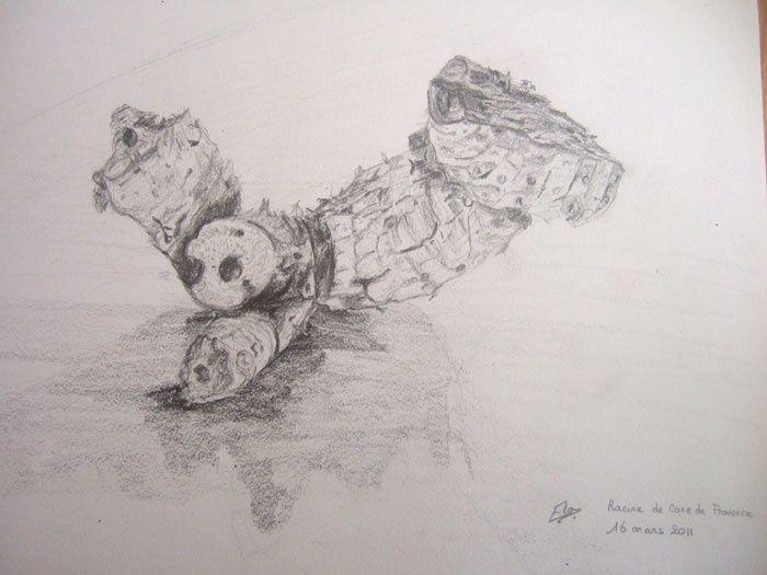 Un dessin à partir d'une racine de canne de Provence