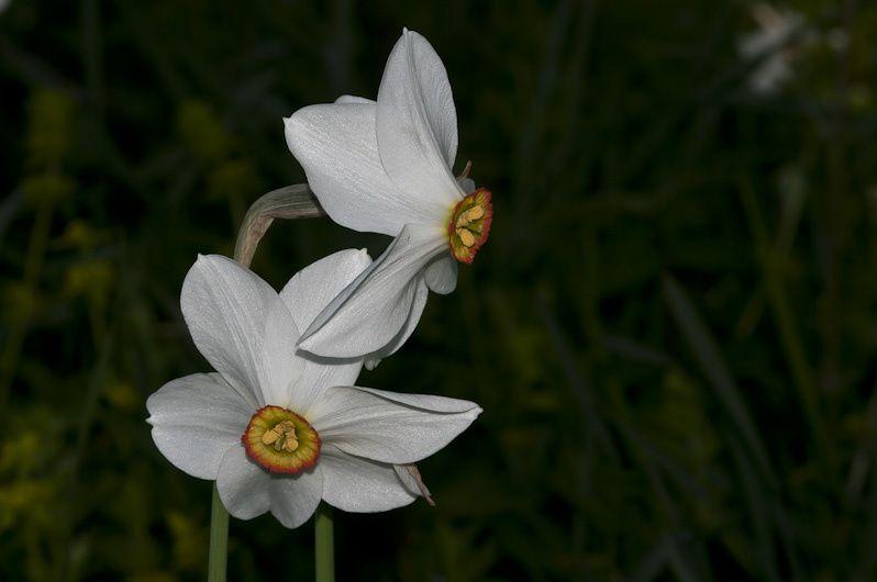 Quelques-unes des 250 fleurs observées en 2010