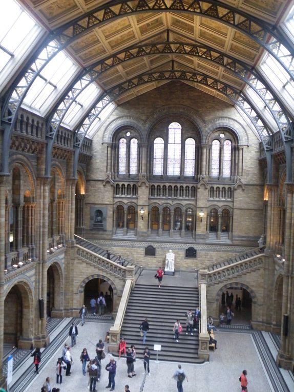 Album - Natural History Museum