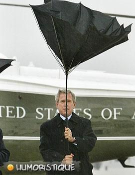 photos de l'article The Bush family part2