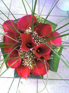 Album - flores-merche