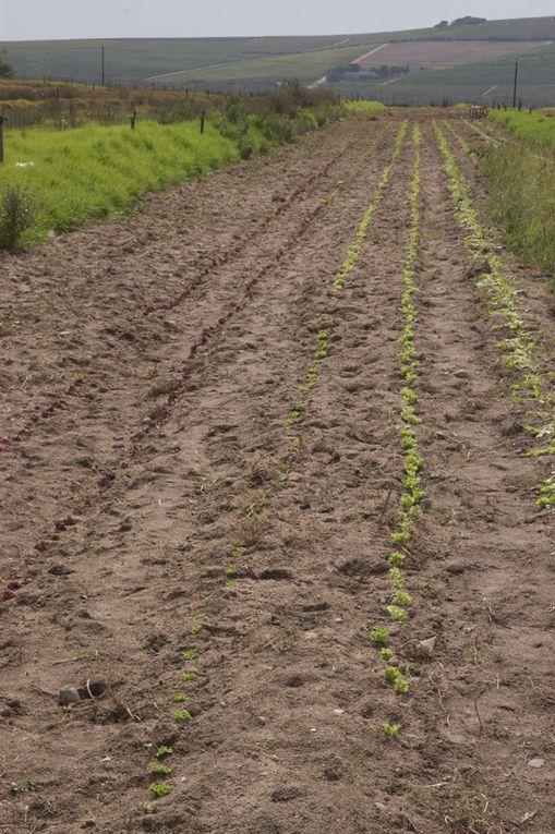 The organic Farm of Eric Swarts