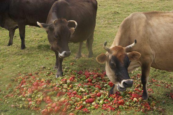 The farm of Aletta Venter