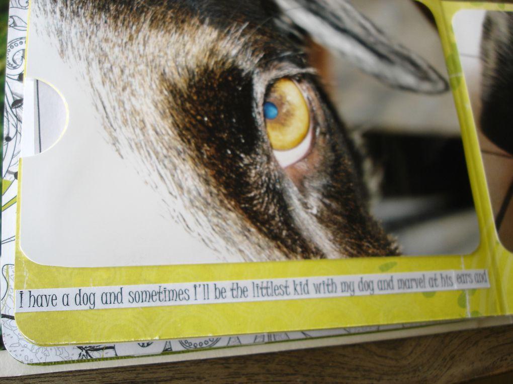 Album - Crash--an-exceptional-dog
