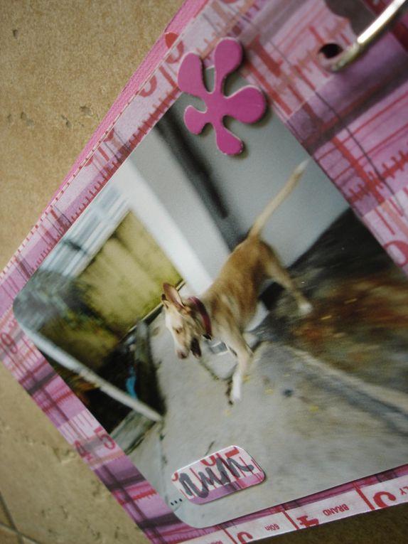 Album - Dora--a-playful-dog