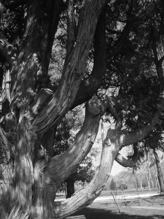 """"""" Un arbre a besoin de deux choses : de substance sous terre et de beauté extérieure. Ce sont des créatures concrètes mais poussées par une force d'élégance. E. De Luca"""