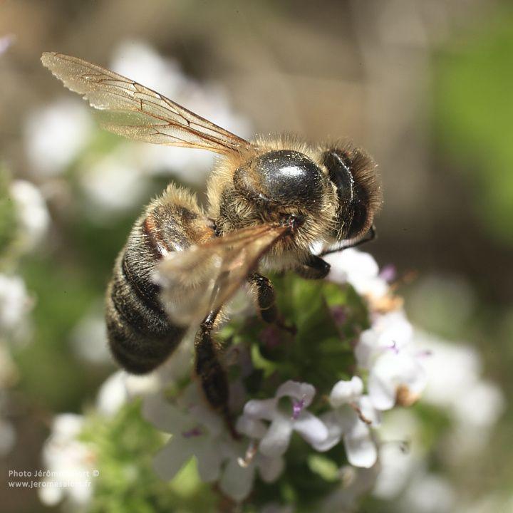 Sélection de photos macro d'insectes et fleurs.