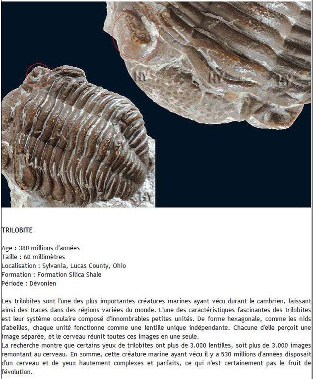 Parmi les découvertes majeures qui invalident la théorie de l'évolution se trouvent les archives fossiles, qui révèlent que les structures des espèces vivantes sont restées inchangées pendant des dizaines de millions d'années.