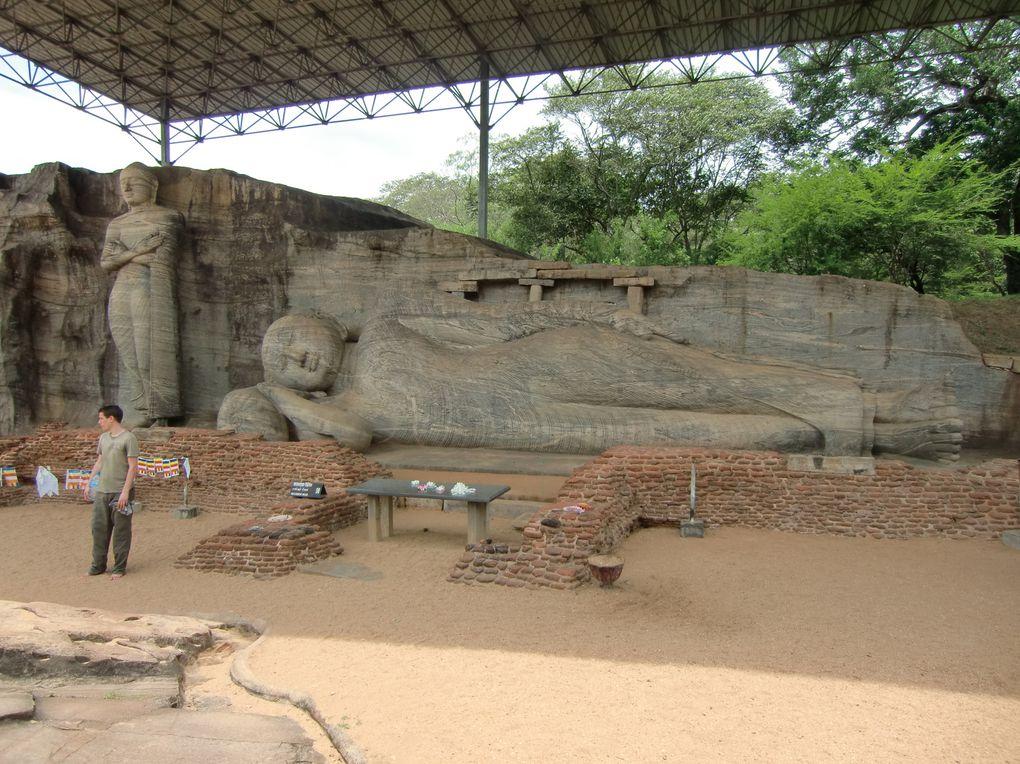 Entre villes impériales, temples, singes, éléphants, plantations de thé et océan indien.