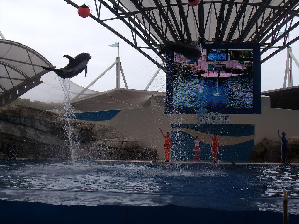 Album - week-end-a-Hualien-avec-les-dauphins