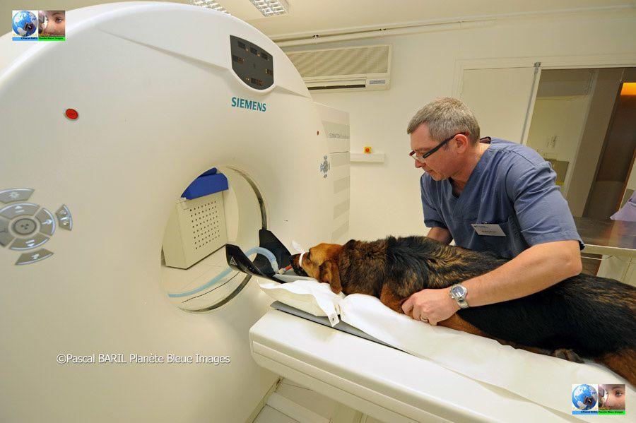 Reportage : Urgence Vétérinaire ©Photos Pascal BARIL/Planète Bleue Images – Novembre/2012Nous avons passé une journée en compagnie des vétérinaires du CHV de Reims (Centre Hospitalier Vétérinaire)