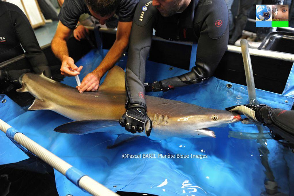 Album - Reportage &quot&#x3B;Mon métier soigneur de requins&quot&#x3B;