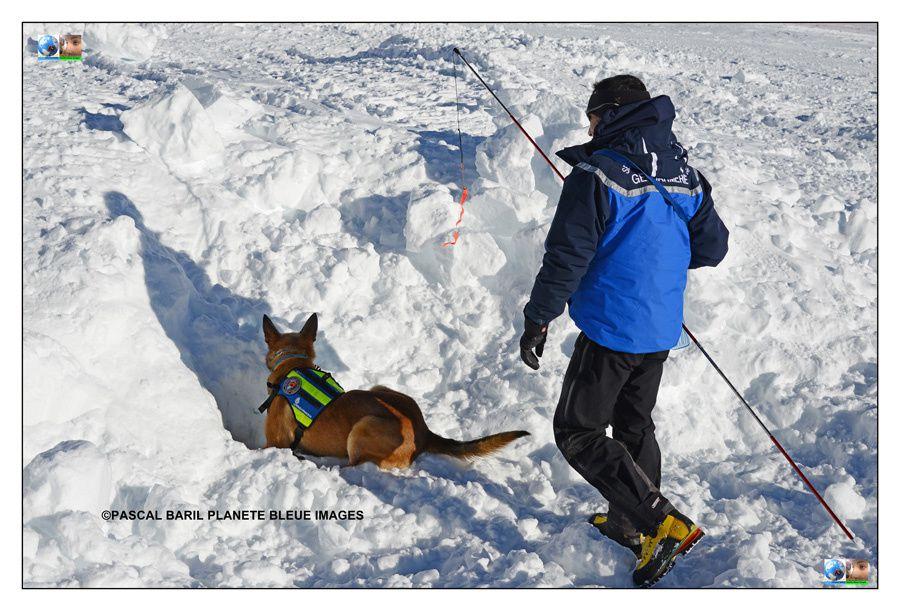 Reportage sur la formation des chiens d'avalanche à Montgenèvre Hautes-Alpes©Pascal BARIL Planète Bleue Images pour le magazine Télé Star