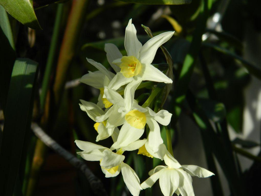 Album - jardin-fleurs