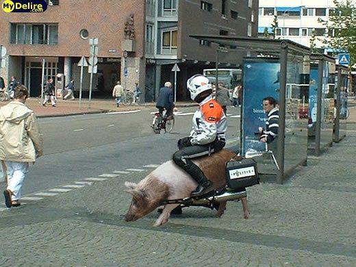 Album - Des-motos-et-des-cochons--