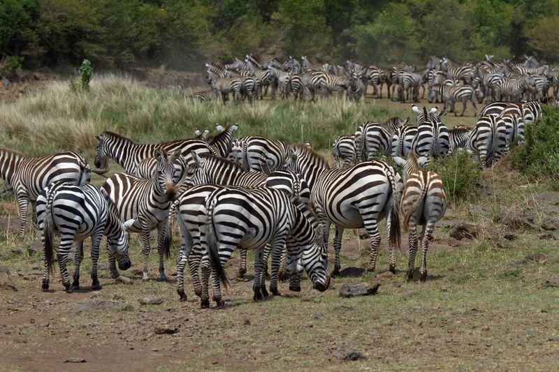 Quelques photos de mon dernier voyage au KENYA en octobre 2013