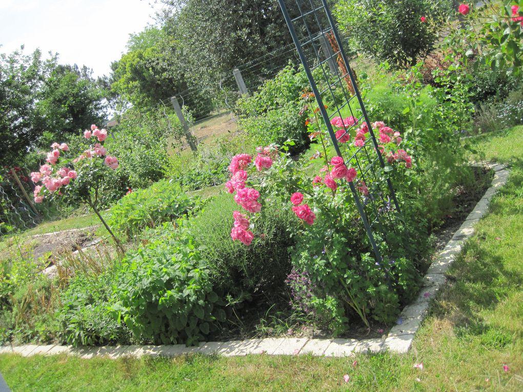 Album - vues-du-jardin