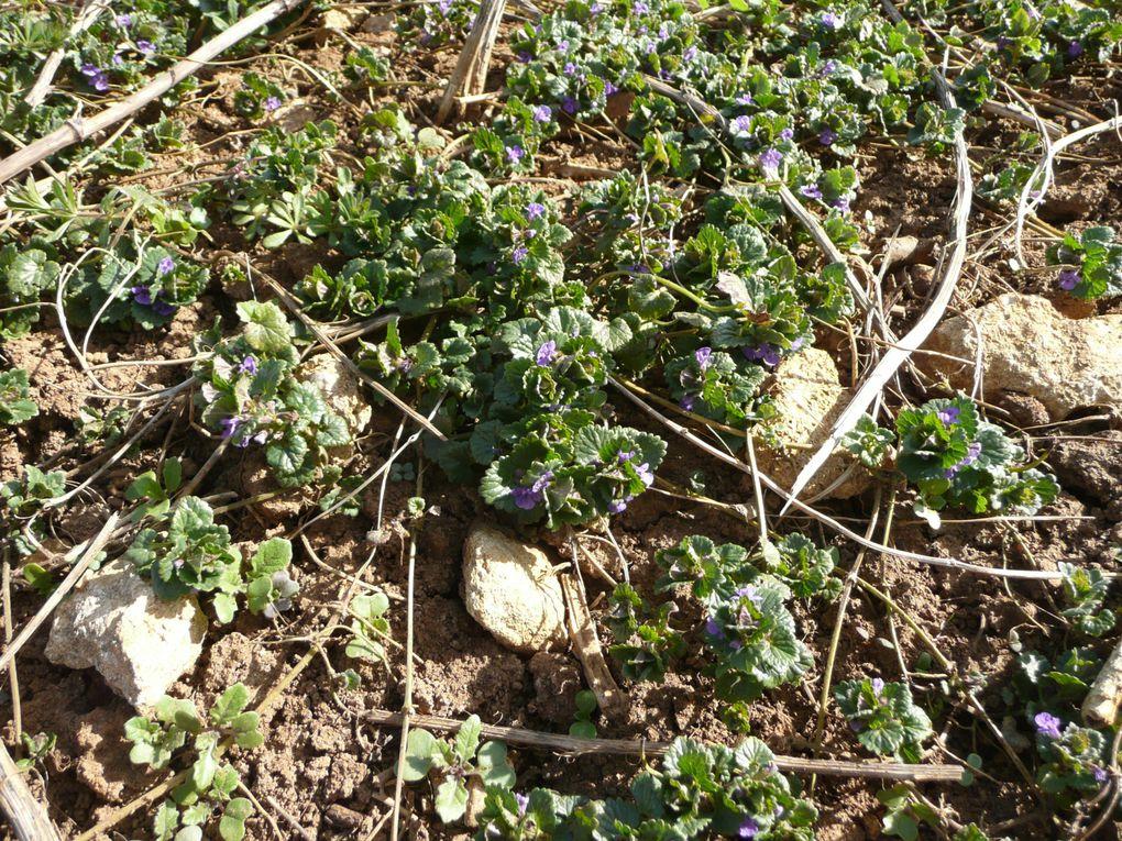 Séance autour des plantes sauvages comestibles lundi 2 avril avec Valérie Loescher