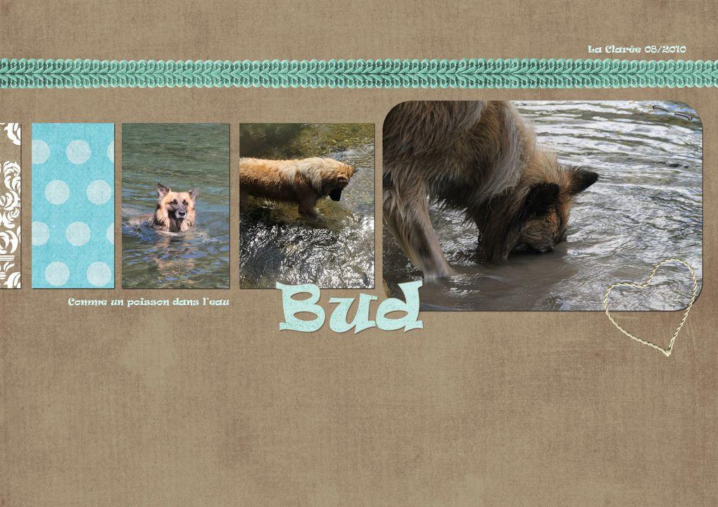 Album - Bud divers scrap
