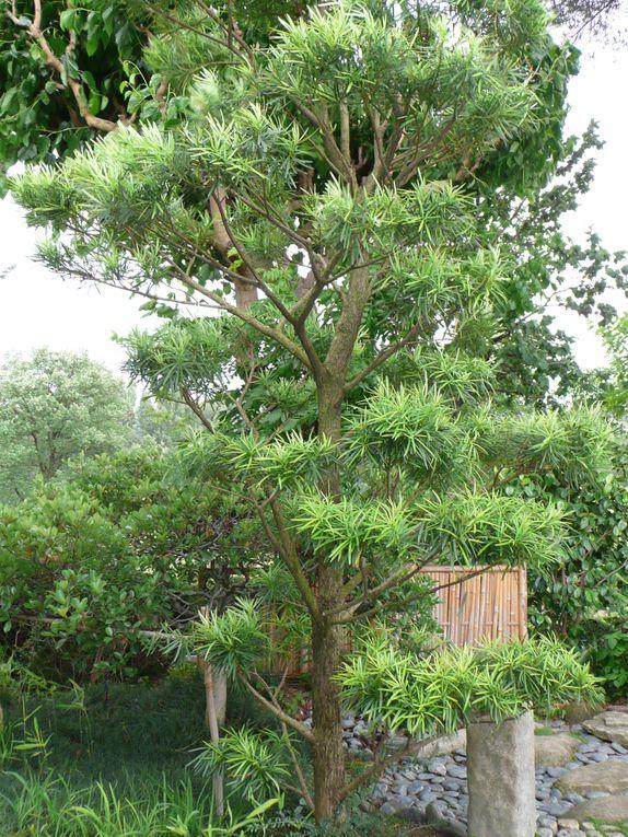 Jardin créé par Eric BORJA(artiste et  paysagiste)Pour ceux qui sont en quête d'harmonie et de sérénité. Le jardin Zen utilise la force métamorphique de l'eau&#x3B; du minéral et du végétal pour suggérer dans un espace réduit la nature mère.
