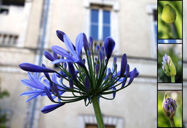 Compilation des plus belles photos de fleurs et de jardins du blog.Diaporama à regarder bien calé dans son fauteuil !