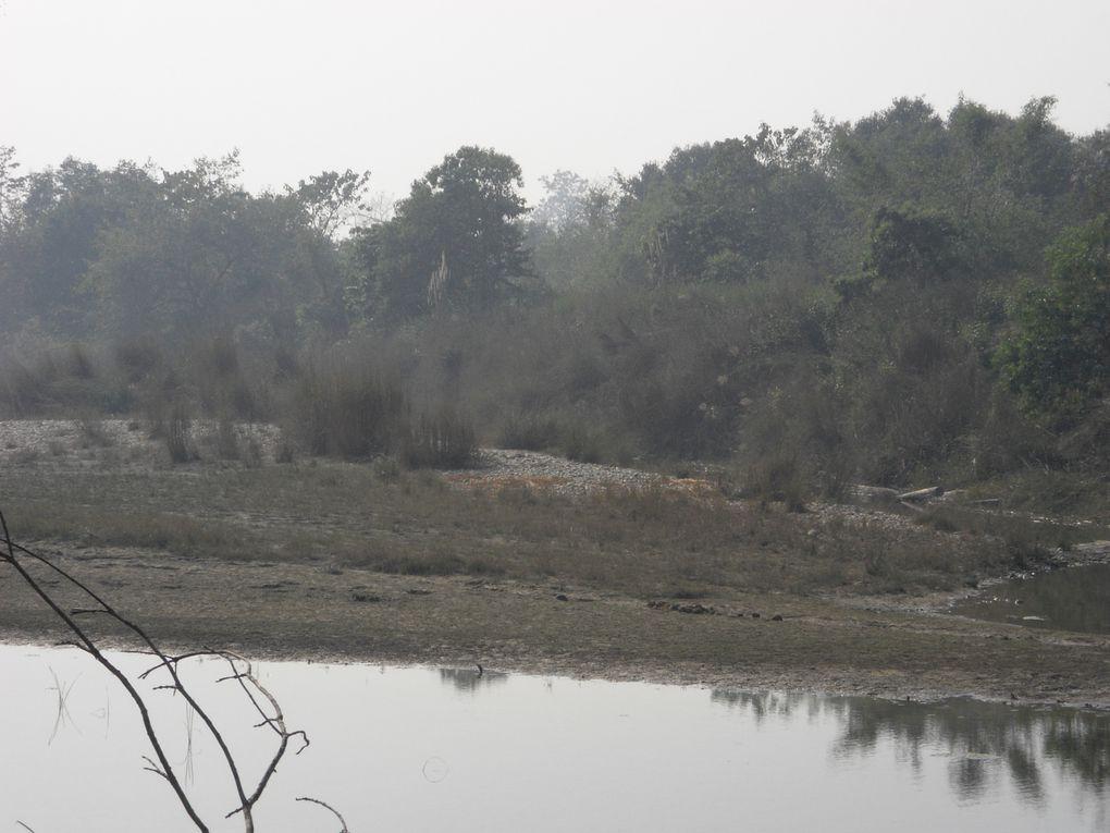 Album - 14.Nepal Wild life