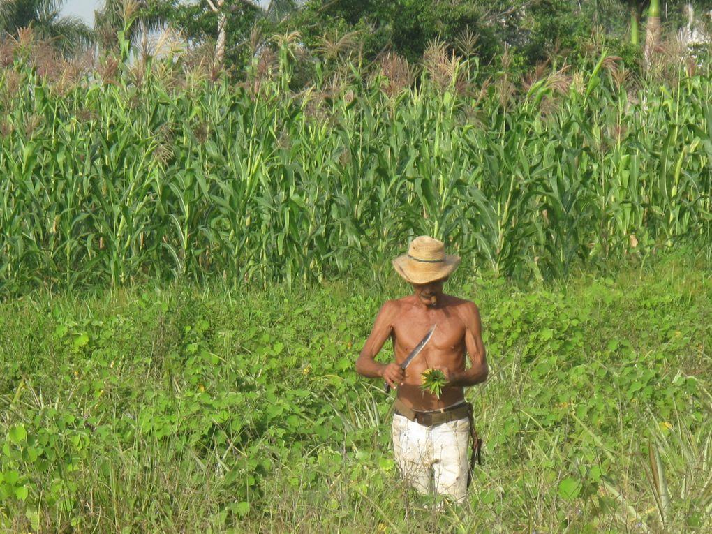 Pérégrinations sur l'île caribéenne.