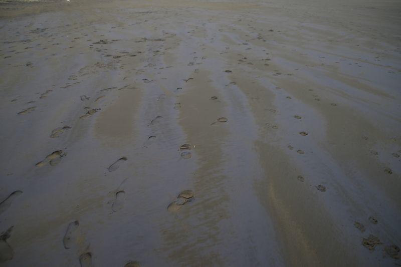Album - 09 - Waitakere Ranges