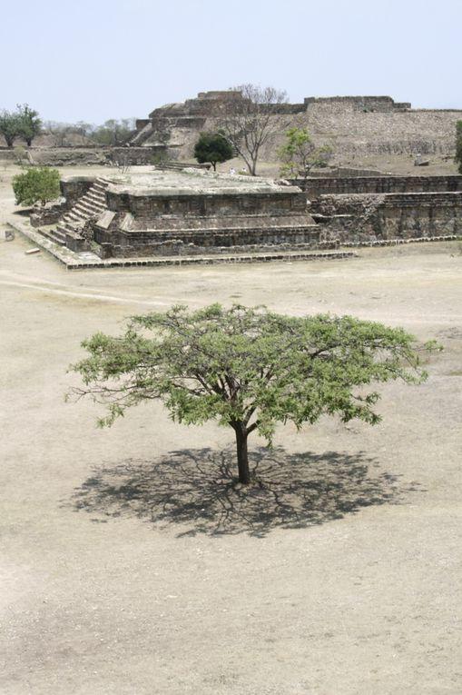 Situé sur une colline à 10 km de la ville d'Oaxaca, ce site archéologique qui aurait été fondé par le peuple olmèque a connu son apogée lors de la période zapotèque entre 200 et 600 après J.-C.