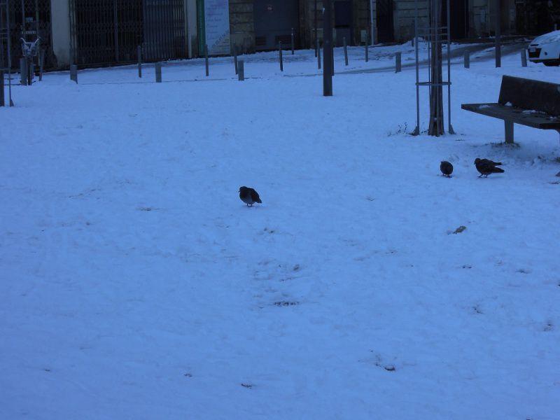 Bordeaux, sous la neige, février 2012