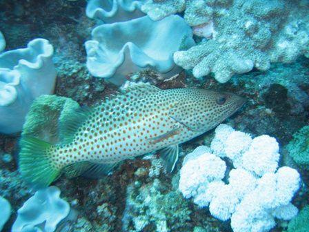 La faune et la flore sous-marine rencontrées lors de nos plongées sur le Phare Amédée à Nouméa(Nouvelle-Calédonie)