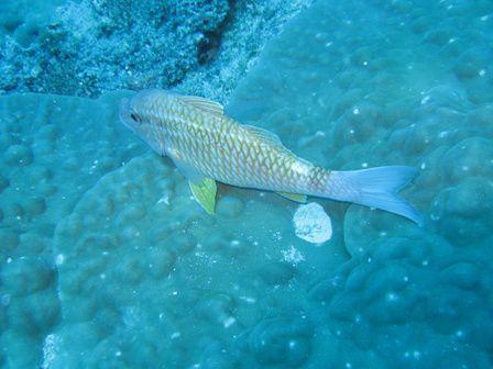 Faune et flore sous-marine rencontrées lors de nos plongées sur l'Ile des Pins (Nouvelle-Calédonie)