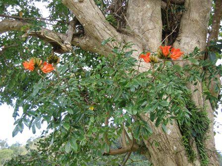 La plupart de ces photos ont été prises lors de notre visite dans le parc forestier et animalier de Nouméa.