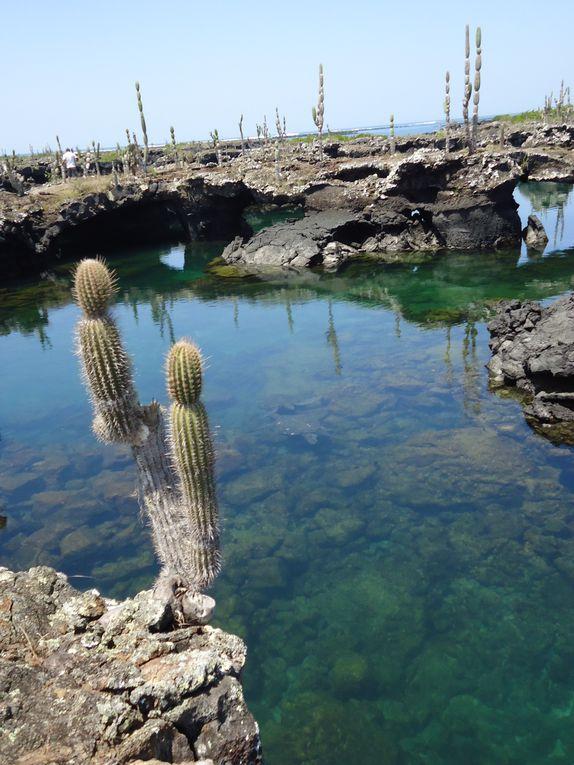 balades dans les iles paradisiaques des Galapagos, découverte de la riche faune marine et terrestre qu'offre l'archipel !!!