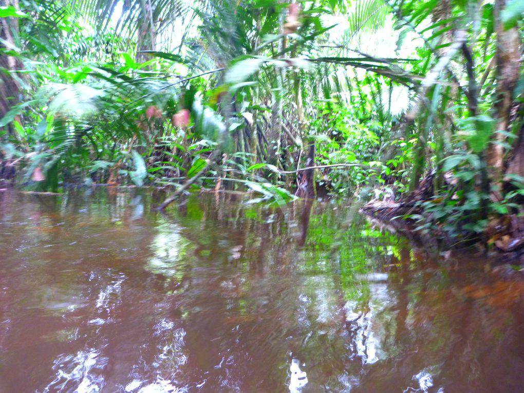 3 jours passé dans la jungle a balader en lancha dans les foret immergées!!!