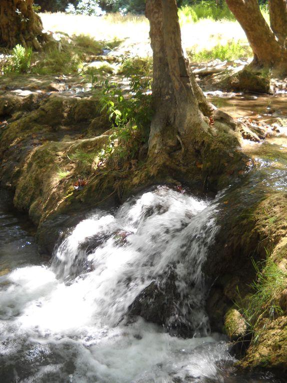 Pour tous ceux qui aiment les promenades à l'ombre des arbres et à la fraîcheur de l'eau, cette balade le long du Lez vous séduira...