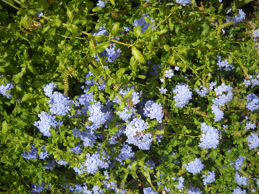 Fleurs et plantes qui reflètent le sud de la France et notamment la région de Montpellier