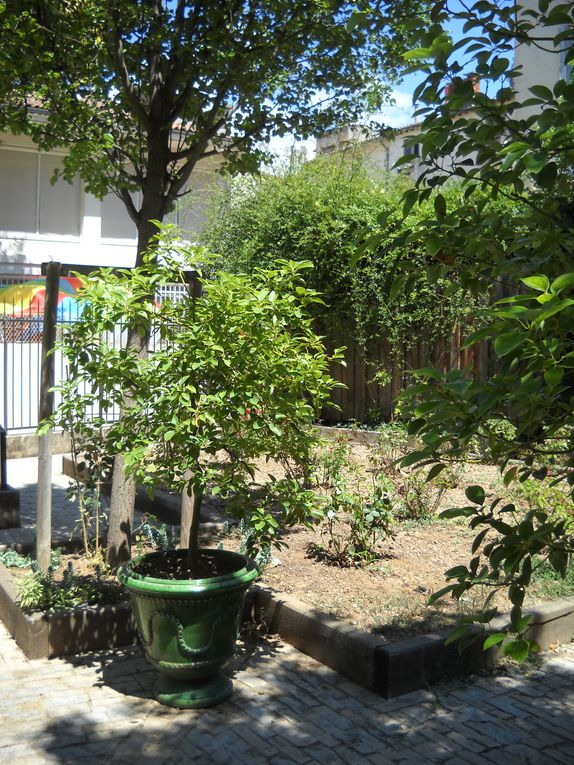 Continuons notre visite de Montpellier à travers la serre amazonienne, le jardin des plantes, le quartier Antigone ainsi que le centre-ville...