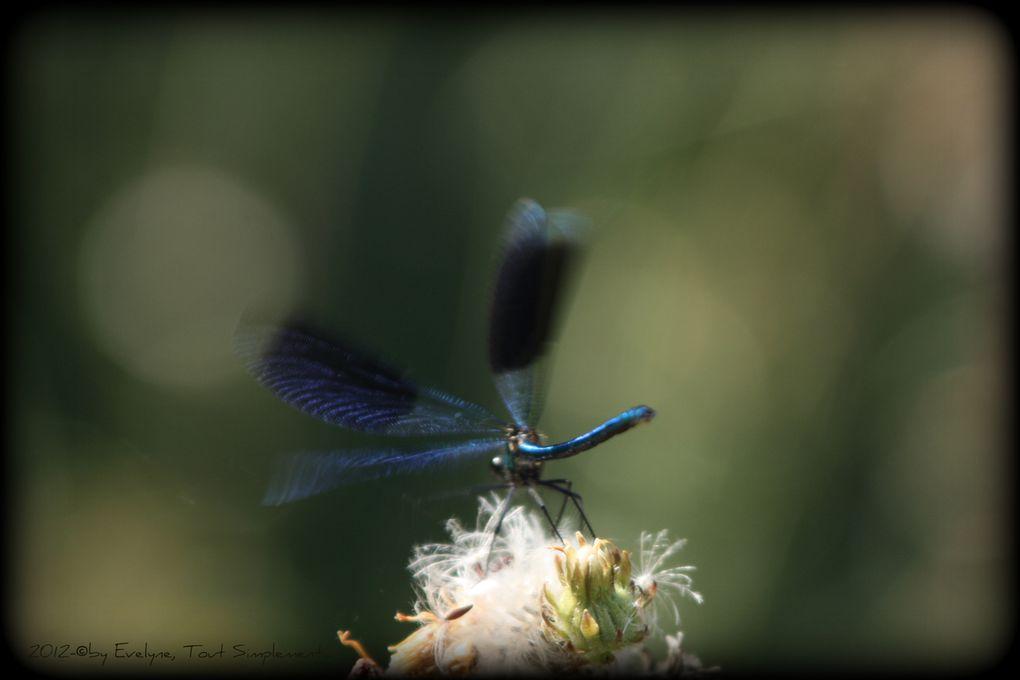 Album - Macro---Insectes--Papillons-