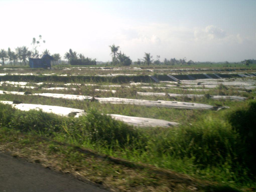 Les quelques images de ma journée à Bali.