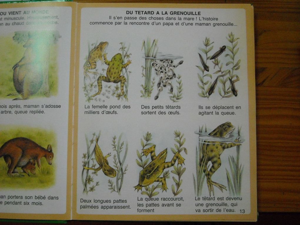 Album - Tetards et grenouilles